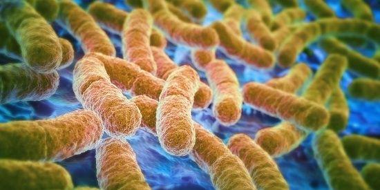 Живые бактерии для кишечника