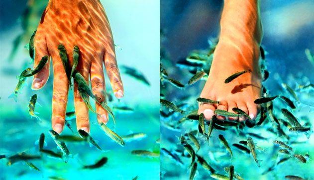 Пилинг рыбками. История появления процедуры, особенности выполнения и отзывы