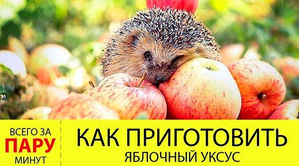 Яблочный уксус рецепт приготовления в домашних условиях выращивании яблок не использовались