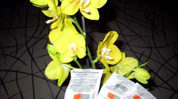 Янтарная кислота для орхидей в таблетках как применять здоровых растений