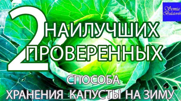 Как хранить капусту в погребе до весны Для этого возьмите примерно 10