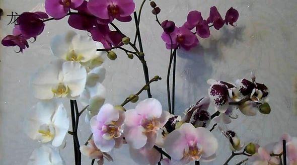 Как ухаживать за орхидеей в домашних условиях после покупки как правильно ухаживать за