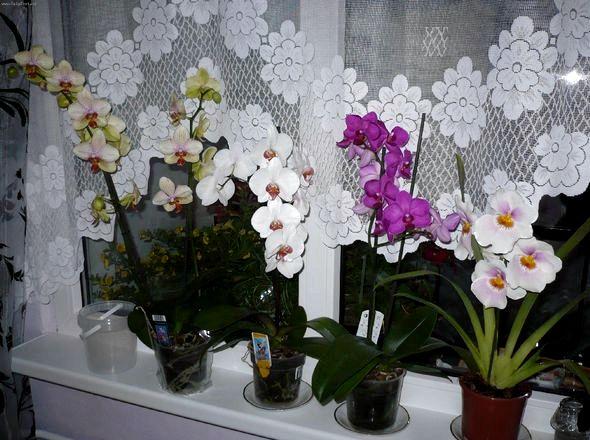 Как ухаживать за орхидеей в домашних условиях после покупки от насекомых, тем