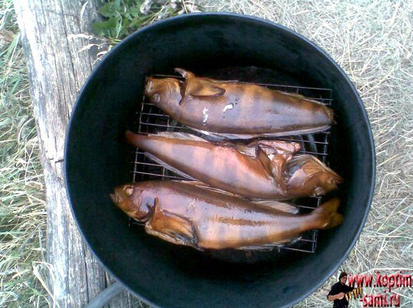 Копчение рыбы в домашних условиях в коптильне горячего копчения небольшие сухие
