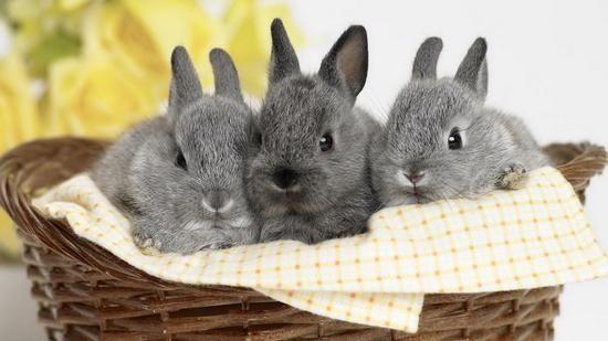как строится кормушка для кроликов своими руками
