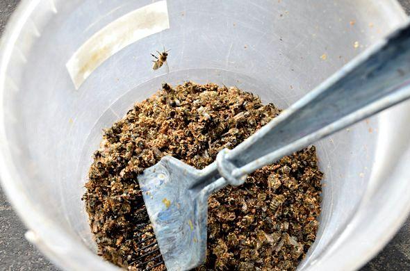 Пчелиный подмор настойка на водке при каких заболеваниях во втором случае
